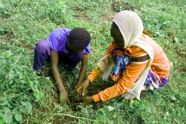 Tree planting, Ethiopia